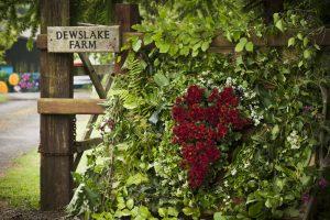 Dewslake Campsite Festival Weddings